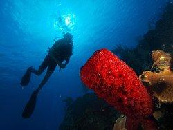 Barracuda Scuba Diving Center