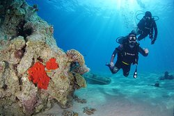 Padi Discover Scuba diving with Nautilus Red Sea
