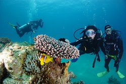 Guided dives in Eilat with Nautilus Red Sea