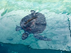 Close encounters with a turtle
