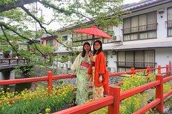 3月20日から4月10日が桜の季節となり、多くのお客様でにぎわいます。
