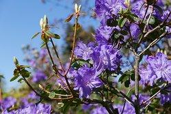 Some delightful spring colours in the Abkhazi Garden.