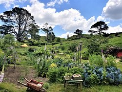 A garden in Hobbiton complete with scarecrow and wheelbarrow. Bag End with artificial oak tree in the distant background.