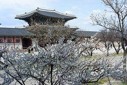 cherry blossom in the palace