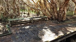 Raised walkways over swamp