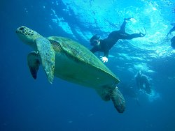 Snorkel excursion para observar tortugas o mantas en lugares únicos !!!  Swim with green turtles and sting ray and much other marine life.   Choose and design your own trip.   Contacto apneaacademy.we@gmail.com