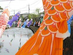 うずま川の鯉のぼり 5月10日迄
