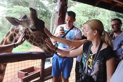 feeding giraffes at Giraffe center