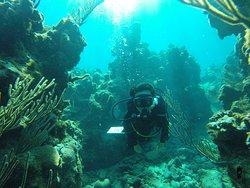 Hermosos corales y peces en las costas habaneras, foto de cliente en una inmersión en Puerto Escondido, Mayabeque, Cuba. Fotos tomadas por Cuba Blue Diving