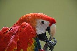 Parrot Mountain