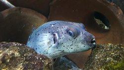 Zoo Acquario di Imola