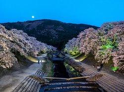Ayukawa Sembon Sakura
