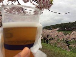 桜とビールの組み合わせは最高