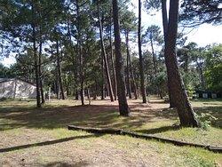 La Forêt de Robin