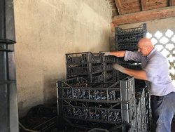 Cassette contenenti la preziosa uva per la produzione di passito.