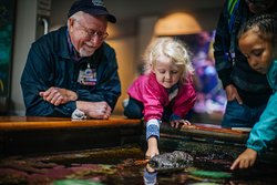 Experience all of the unique wonders of Oregon's tidepools at our touchpool.