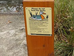 do not feed ducks