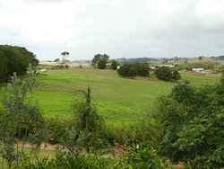View from the dining/breakfast room in the Gumdiggers café.