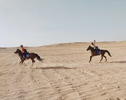 Gallops in Hurghada