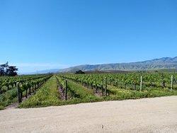 Biddle Ranch Vineyard