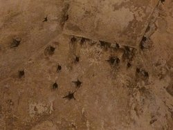 Bats in Amber Fort