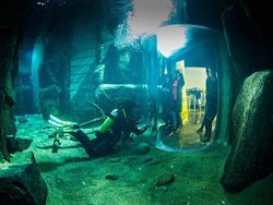 Scuba divers in the Aquarium