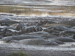 Hippo wallow - Serengeti