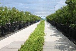 農園はすべて足元がきれいに整備されているので、ハイヒールでも・サンダルでもOK