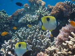 . Nusa Penida est une petite île à côté de Bali, nous pouvons faire une visite en 1 jour, avec diverses activités et voyages