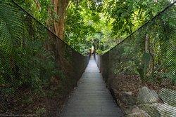 Bridge in the jungle.