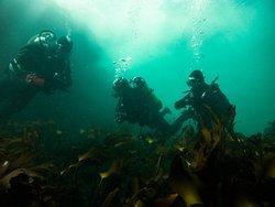 Beauty of underwater Ireland