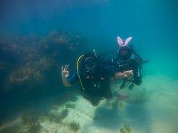 Melhor experiência (melhor escola de mergulho)!
