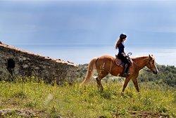 Gregs Spetses Horses