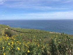 Ocean Trails Reserve