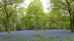 Roeburndale Woods