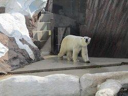 上野动物园
