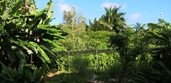 The Vanillery of Kauai
