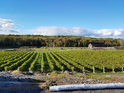 Potter Settlement Winery in the fall