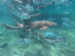 Amazing snorkeling and awesome staff