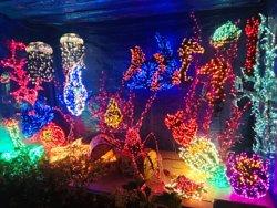 贝尔维尤植物园
