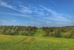 Wilson Orchard