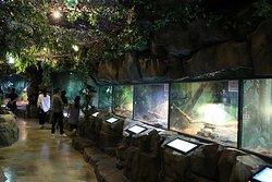 양서 파충류 생태공원 내부 전경