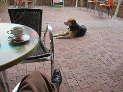 Cafés de l'Alios E La Mascotte Gadjo Fidèle au Poste Entrée ! Biscarrosse Bourg 40600.
