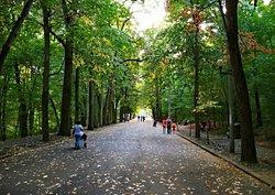 Trivale Park