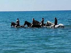 Laganas Horse Riding Center