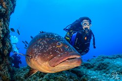 Vida marinha - Santa Maria