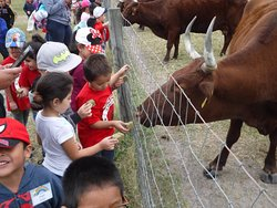 Have you ever fed a cow?  Our spring guests and students on our spring field trips love to do this!!