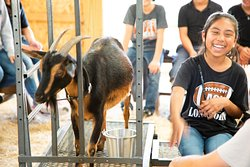 At some of our events you get to milk a goat!!  Check that off your bucket list!