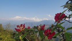 A view we would not have seen without Bishnu's recommendation