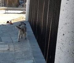 Dog pow-wow.